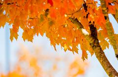 autumn colors within southern city limits in late november - stock photo