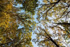 Autumn treetops with bright sky Stock Photos