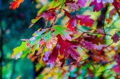 Autumn season colors Stock Photos