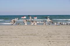flying seagulls on the beach - stock photo