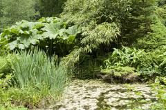 flourish vegetation - stock photo