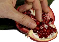 Hand of the farmer who collects the seeds of ripe pomegranate fruit 1 Stock Photos
