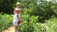 Two children picking vegetables in garden Stock Footage