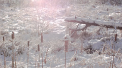 Winter Cattails 03 Stock Footage