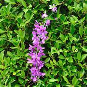 purple orchid in green bush - stock photo