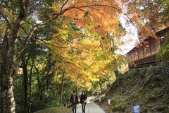 Beautiful maple season Stock Photos