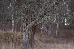 Stock Photo of old bare tree