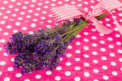 bouquet lavender on dotted background - stock photo