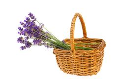 bouquet lavender in basket - stock photo
