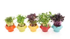 fresh garden cress in colorful crockery - stock photo