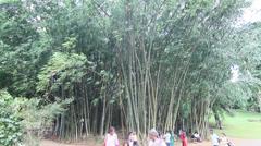 Giant Bamboo, Royal Botanical Gardens Stock Footage
