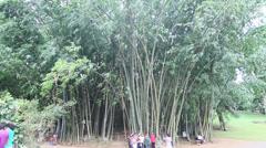 Royal Botanical Gardens, Kandy Stock Footage