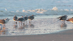 4K Flock of Seagulls on the Beach 3860 Stock Footage