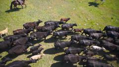Cattle drive aerial med - stock footage