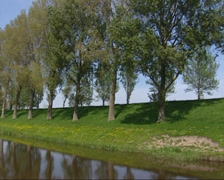 Canal + pan - dike with row of trees in straight line , The Netherlands Stock Footage