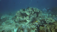 Coral reef in the Raja Ampat Islands, West Papua, Indonesia Stock Footage