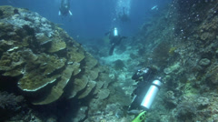 Scuba diving over coral reef full of marine biodiversity - stock footage