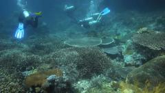 Scuba divers exploring thiving coral reef Stock Footage