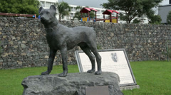 San miguel cattle dog statue, azores, portugal Stock Footage