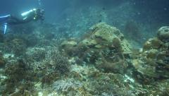 Coral reef garden thriving with reef fish and corals - stock footage