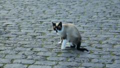 Colorful kitten, cat walking on cobble stones Stock Footage