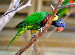 parakeet on branch - stock photo