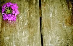 purple flower wooden slat background - stock photo
