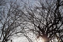 bare branches of a tree against the morning sky - stock photo