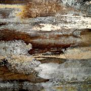 Moldy Wood - stock photo