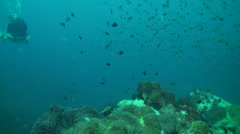 top of pinnacle with coral - stock footage