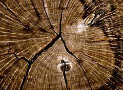 Texture tree rings Stock Photos