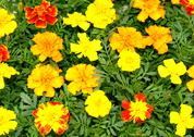 Stock Photo of bright yellow red and orange flora picture
