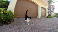 cat approaching a camera - stock footage