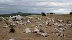 Bone pile in Mongolian desert Stock Footage