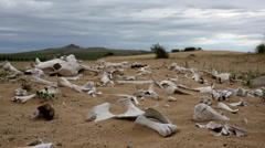 Bone pile in Mongolian desert - stock footage