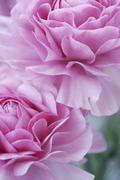 artwork of pastel pink flowers - stock photo