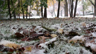 Stock Video Footage of Fallen leaves covered in snow