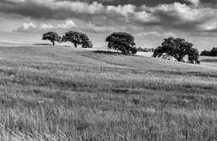 Four trees landscape Stock Photos