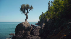 Little Spirit Cedar Tree on Lake Superior Stock Footage