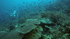 Scuba diving over thriving coral reef - stock footage