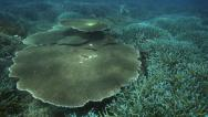 Stock Video Footage of Coral garden with an abundant variety of corals and different species of fish