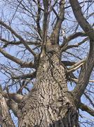 knotty tree trunk - stock photo