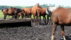 horses nod their heads - stock footage