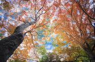 Stock Photo of Close up on falling autumn leaves
