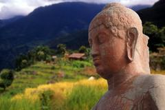 Head of buddha, with nepalese rice fields Stock Photos