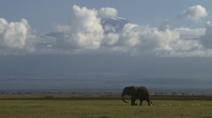 A group of elephants walk past the camera, with kilimanjaro in the background Stock Footage