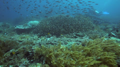 Coral reef thriving with fish and corals biodviersity - stock footage