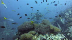 Fish cleaning station wide shot Stock Footage