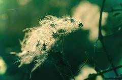 Autumn fluffy plants Stock Photos