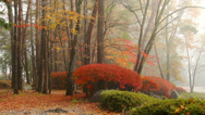Stock Video Footage of Autumn, fog, forest.